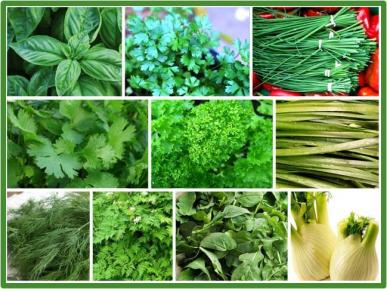 A collection of herbs